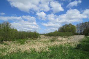 Naturwaldentwicklung